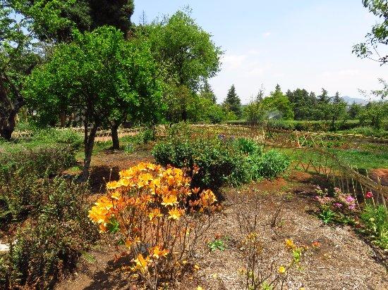Kunming Botanical Garden: 杜鵑園