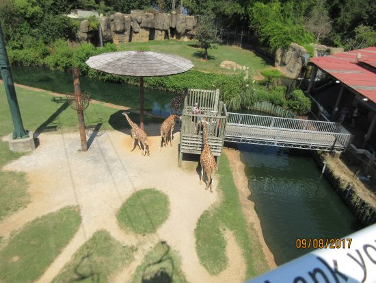 Montgomery Zoo : View from the Skylift