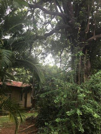Hotel Sigiriya: photo3.jpg
