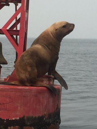 White Rock, Kanada: This beautiful Sea Lion gave us quite the show, we actually saw her jump onto this tower.