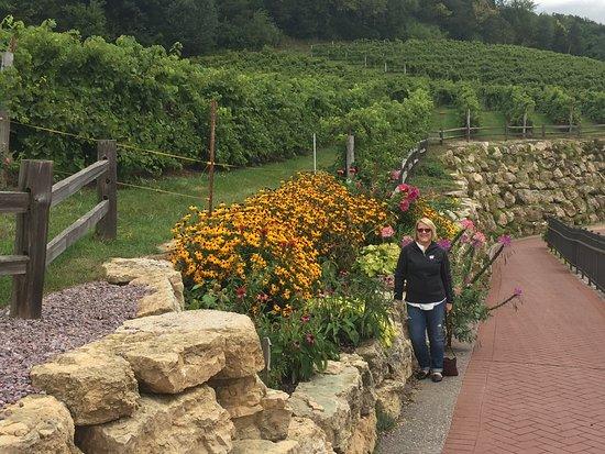 Prairie du Sac, WI: Vineyard