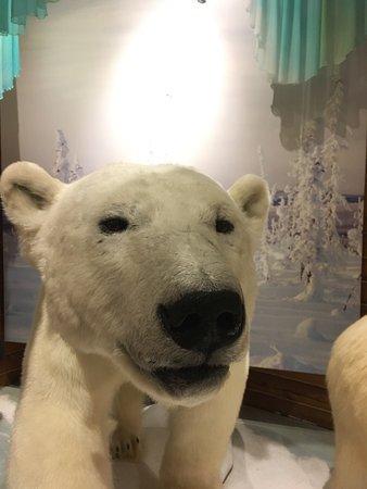 MacBride Museum: photo1.jpg