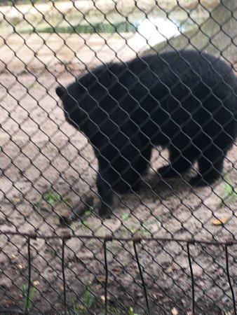 Naples Zoo at Caribbean Gardens: photo1.jpg