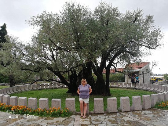 Old Olive Tree: photo1.jpg