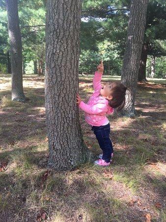 North Haven, CT: Happy toddler at Wharton Brook