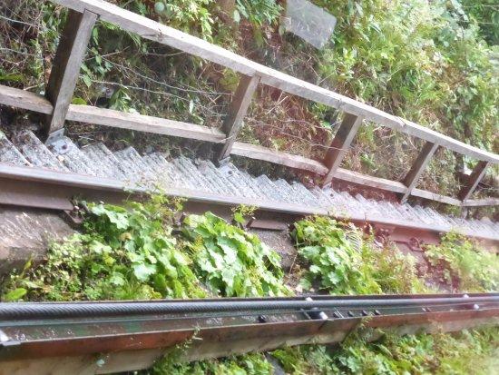 Machynlleth, UK: Cliff railway rails awesome ferns grow underneath it