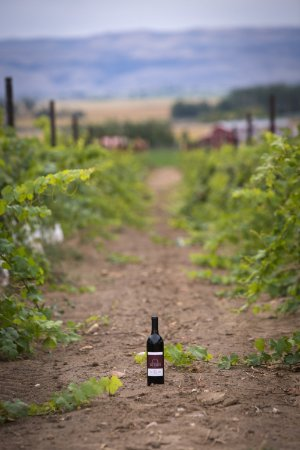 Caldwell, ID: A great wine is made in the vineyard.