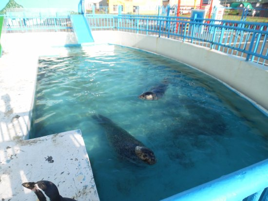 seal and penguin tank - 稚内市...