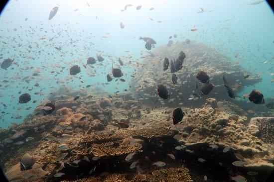 Aqua Vision Scuba Diving: fishy dive spot