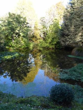 Te Kuiti, New Zealand: Peaceful ponds and trees