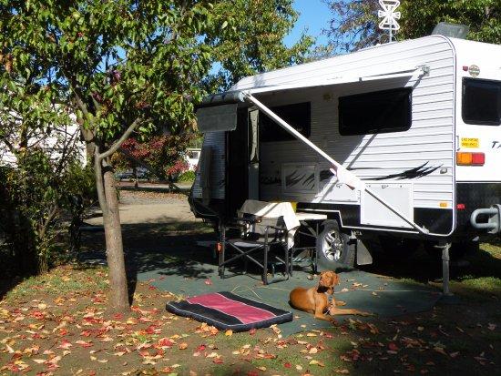Lake Hamilton Motor Village & Caravan Park: Lovely setting for pets.