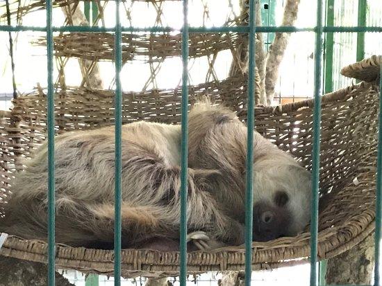 Sloth Sanctuary of Costa Rica: photo1.jpg