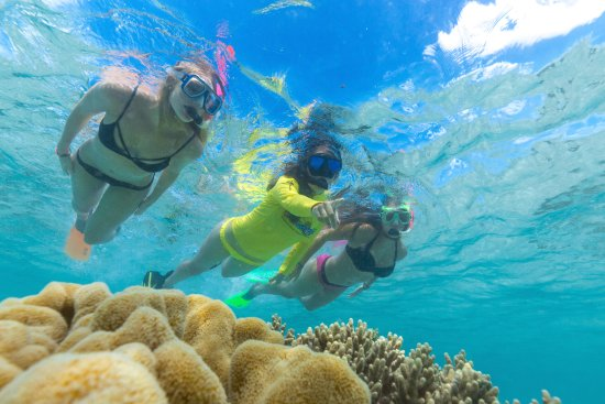 Cape Tribulation, Australia: Guided Snorkel