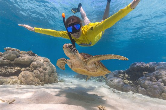 Cape Tribulation, Australië: Swim with turtles!!