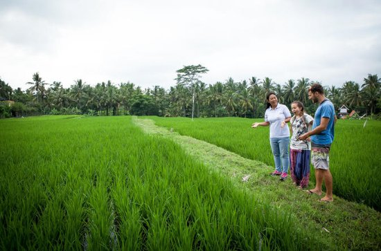 Half-Day Ubud Heritage Food Tour