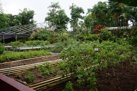 Kariwak Village Holistic Haven and Hotel: Kitchen garden