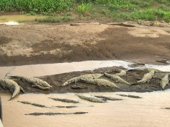 Cuchi Transfers and Tours: Crocodile bridge