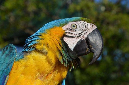 Maleny, Australie : photo0.jpg