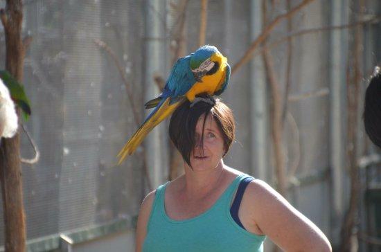 Maleny, Australie : photo1.jpg