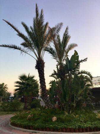 Sea Planet Resort & Spa : Szerintem5*os hotelnek megfelelő,  aki a repedéseket akarja keresni a sarkakban,az tegye,aki nem