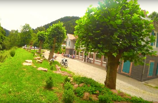Sophi Park