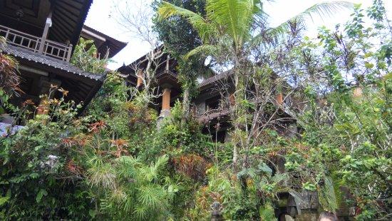 Gustis Garden Bungalows : Tuin