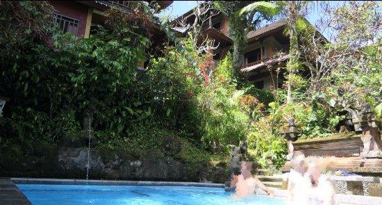 Gustis Garden Bungalows : Zwembad midden in de tuin