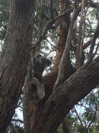 Flinders Chase, Australien: photo3.jpg