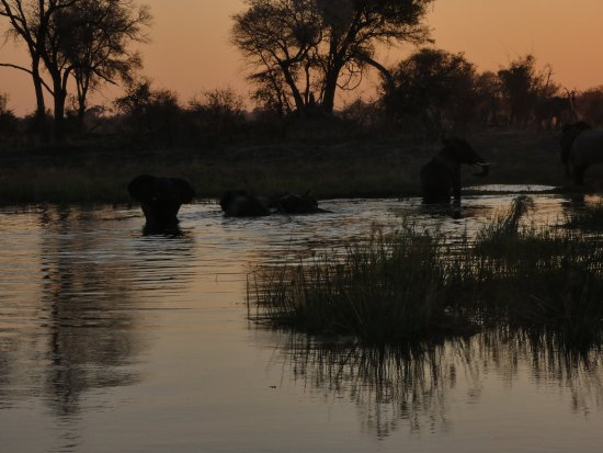 Caprivi Region, Namibia: Elephants