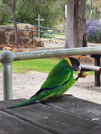 Mundaring, Australia: my lunch companion