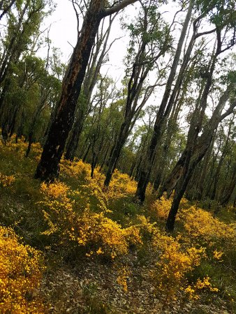 Mundaring, Australia: A walk through the woods