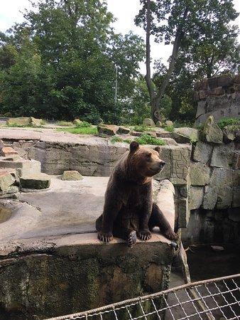 Калининградский зоопарк: photo1.jpg