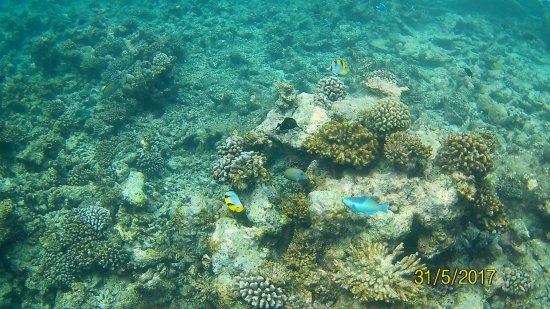 Centara Grand Island Resort & Spa Maldives: unter Wasser 2