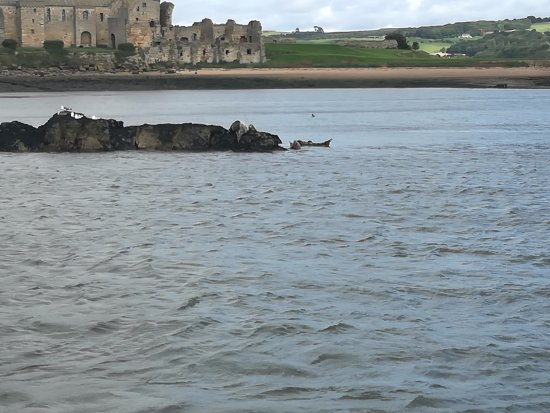 Maid of the Forth: Island