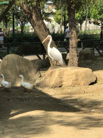Bursa Zoo - Bursa Zoo, Bursa Resmi - TripAdvisor