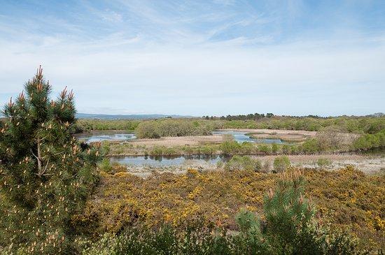Laguna de Cospeito
