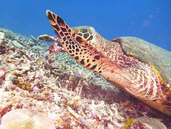 Gili Meno, Endonezya: Friendly Turtle (Me.Vi.SE Room)