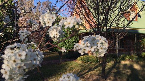 Broke, Australia: Garden