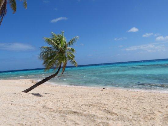Tuherahera, Polinesia Francesa: Cocotier idéal pour prendre une photo !