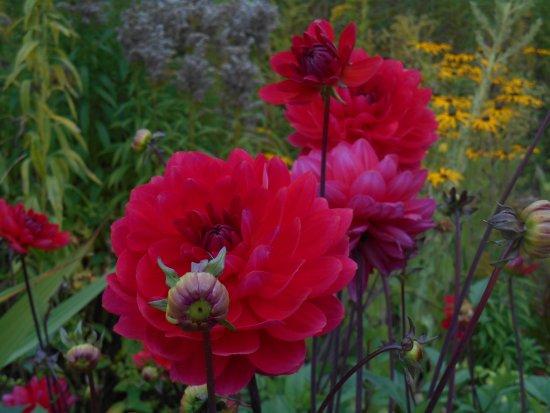 Helmsley, UK: Breathtaking blooms