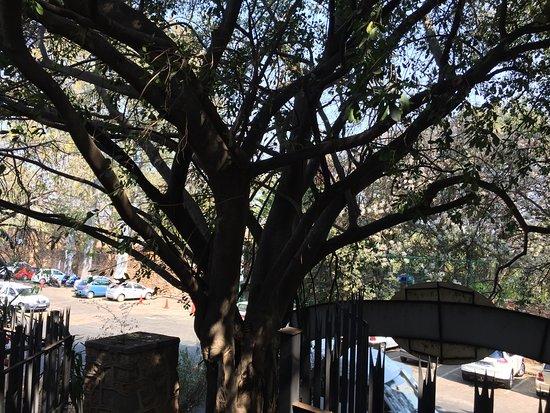 Schoemansville, Νότια Αφρική: photo0.jpg
