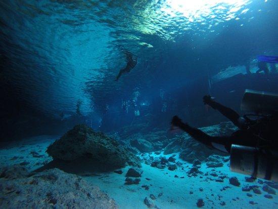 La Calypso Dive Center: photo0.jpg