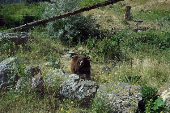 Kamloops Wildlife Park Photo