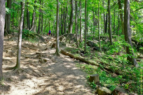 Rattlesnake Point Conservation Area: Rugged terrains in the forest, with tree roots and small rocks scattered along the trails.