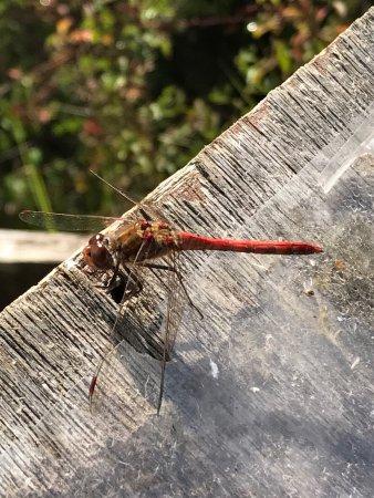 Monkton Nature Reserve: photo5.jpg