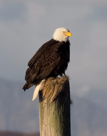 Craig, AK: Bald eagles are a common sight on our tours.