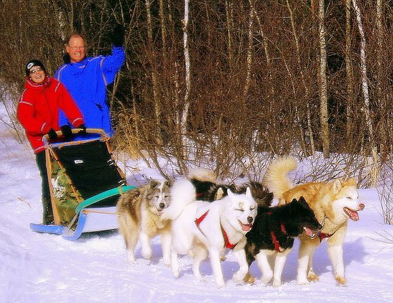 Ely, MN: Senior adventure travelers find our dogsled vacations to be a perfect fit.