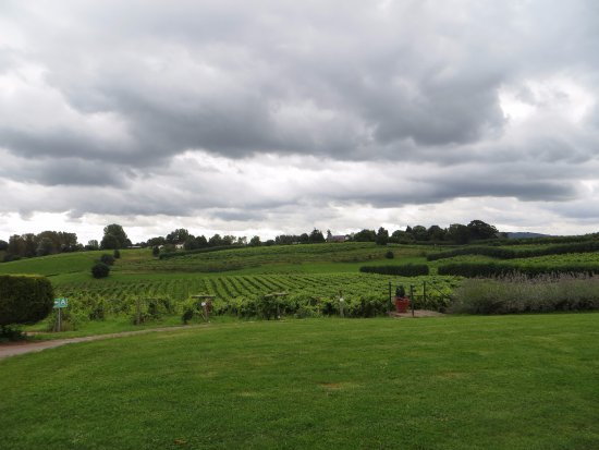 Newent, UK: practically in the vineyard