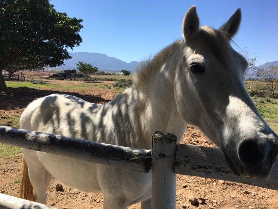 Robertson, Sydafrika: photo1.jpg
