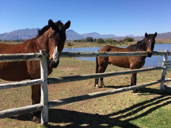 Robertson, Sydafrika: photo2.jpg
